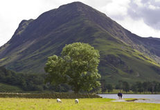 View of Buttermere. Stock Images