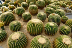 View of a cactus Royalty Free Stock Image