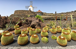 View of cactus garden in Guatiza, Lanzarote Stock Photography