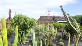 View of cactus garden, jardin de cactus in Guatiza, Lanzarote, Canary Islands, Spain, 4k footage video. View of cactus garden jardin de cactus in Guatiza stock video footage