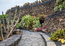 View of cactus garden , Lanzarote Stock Images