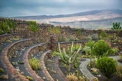View of cactus garden , Lanzarote Stock Image