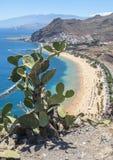 View of  cactus and Las Teresitas Beach, Tenerife, Spain Royalty Free Stock Images
