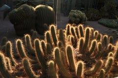 Cactus of Botanic Garden in Marrakech, Morocco royalty free stock photography