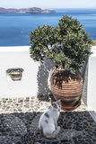 View of the caldera from the balcony on which the cat sits. Fira, Santorini,. Greece royalty free stock photos