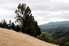 View from a California hillside Royalty Free Stock Image