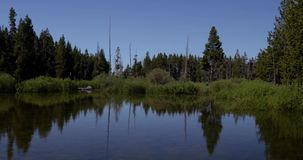 View of calm reflective pond 4k 24fps. View of calm reflective pond stock footage