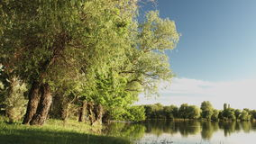 View of the calm river water. Static view of the calm river water, sky and trees on the coast stock footage