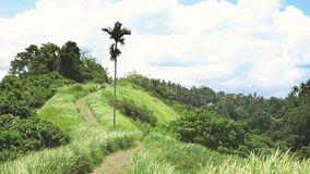 View of the Campuhan Ridge Walk, Green Hill, Palm Tree and Jungle in Ubud, Bali. Indonesia stock video footage