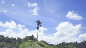View of the Campuhan Ridge Walk, Green Hill, Palm Tree and Jungle in Ubud, Bali. Indonesia stock video