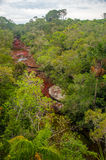 View of Cano Cristales in Colombia. The beautiful colors of Cano Cristales in Colombia stock photo