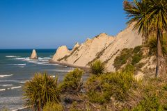 View of Cape Kidnappers New Zealand. View of Cape Kidnappers with cabbage trees in front, Hastings, New Zealand Stock Photos