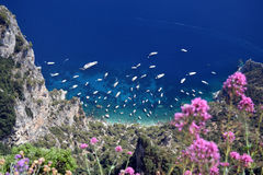 View of Capri riviera with purple wild flowers from Mount Solaro in Anacapri, Capri Island, Italy. View of Capri riviera with yachts and purple wild flowers from Stock Image