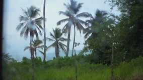 The view from the car window in the rain forest in the rain. The view from the car window in the rain forest during the rain stock footage
