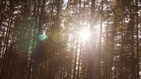 View from Car Window at Sunlight Thru Pine Tree Autumn Forest. 4K, Slowmotion. View from Car Window at Sunlight Thru Pine Tree Autumn Forest. 4K, Slowmotion stock video footage