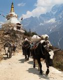 View of caravan of yaks and stupa Royalty Free Stock Photography