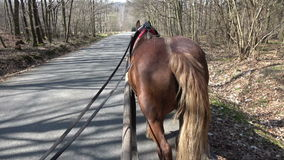 View from a carriage of a horse during a ride in the forest stock footage