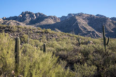 View of Catalina State Park Royalty Free Stock Images
