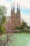 View of cathedral and garden with lake and blooming tree. View of La Sagrada Familia cathedral and garden with lake and blooming tree on sunny spring day royalty free stock photo