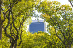 View from the Central Park of New York to skyscrappers Stock Photos