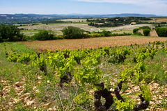 View of Châteauneuf-du-Pape Stock Image