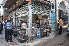View of chicken and hen shop Royalty Free Stock Photos