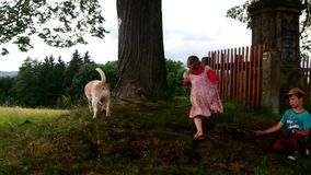 View of children with dog go for a walk. Children outside stock video footage