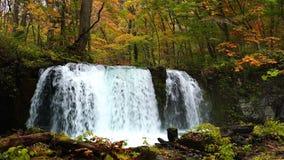 View of Choshi Otaki Waterfalls in the beautiful coloriful autumn forest