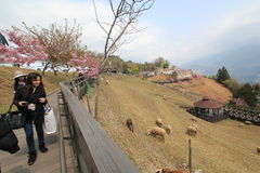 View of Cingjing Farm in Taiwan Stock Images