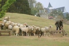 View of Cingjing Farm in Taiwan Stock Photo