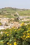 View from the Citadel of Victoria, the capital city of Gozo, Malta. With crown daisy flowers in front Royalty Free Stock Images