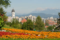 View on a city called Ljubljana with flowers infront Royalty Free Stock Images