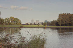 View of  City from a Lake with Ducks Stock Photos