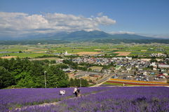 The view of city and lavender field on the hill Stock Photos