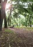View in the city park of Kherson Ukraine. On green trees and sun royalty free stock image