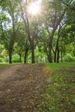 View in the city park of Kherson Ukraine on green trees. And sun, shooting from below royalty free stock image