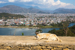 View of the city Pokhara Stock Images