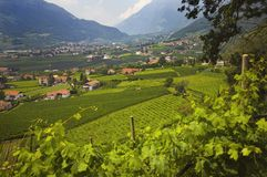 View Of A City In The Valley Near Merano And Terraced Vineyards Stock Photography