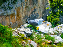 View from a cliff on the island of Capri, Italy Stock Photos