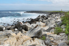 View of cliffs and blowhole in La Espanola island. View of Suarez point and lighthouse in La Espanola island, Galapagos, Ecuador royalty free stock images