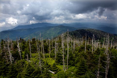 View from Clingman's Dome Royalty Free Stock Photo