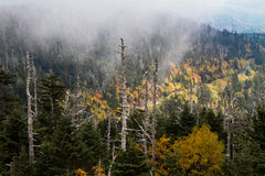 View at Clingmans Dome of Great Smoky Mountains NP Stock Images