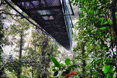 View of the cloud forest canopy stock image