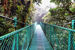 View of the cloud forest canopy Stock Images