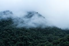 View on cloud rain forest in Peru, jungle in tropical region, travel adventure in Peru, clouds above rain forest, beautiful. Landscape scenery, Wallpaper royalty free stock image