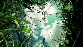 View of clouds. In the sky through the green grass stock video footage