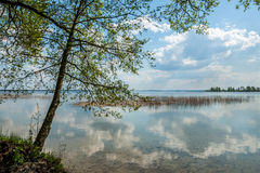 View from the coast on the big spring lake. tree. reflection of the cloudy sky in water Royalty Free Stock Photos