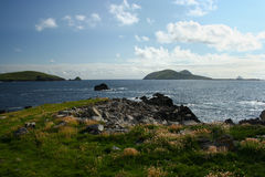 View of Great Blasket Island from Dingle Peninsula from pasture. A view of the Blasket Islands from the wild, wind and sea swept coast of the western Dingle Royalty Free Stock Images