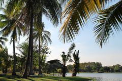 The view on the coconut palm trees near to a lake on a background of a blue sky. Bangkok, Thailand Stock Image
