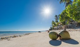 View of Coconuts at Anda beach Bohol island with coconut palms. Tree leafs, blue sky and turquoise sea water, Travel Vacation Stock Photo